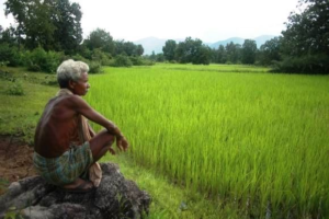 ସେଇ ଦୁଇ ପଦ କଥା ( ଜଣେ ଚାଷୀ ବାପାର କାହାଣୀ ), Father and Son Story, Farmer's Real Story, Real Story, Nitidina, Odisha, News, Real Story, Health Tips, Life style, Daily Living, Tips, Job Updates, Yoga, Meditation, Stay Healthy, Lockdown may extend after 3 may, lockdown extend, Busy in Office Work
