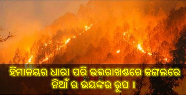 ହିମାଳୟର ଧାରା ପରି ଉତ୍ତରାଖଣ୍ଡରେ ଜଙ୍ଗଲରେ ନିଆଁ ର ଭୟଙ୍କର ରୂପ ।, fire in uttarakhand forest, India, Nitidina