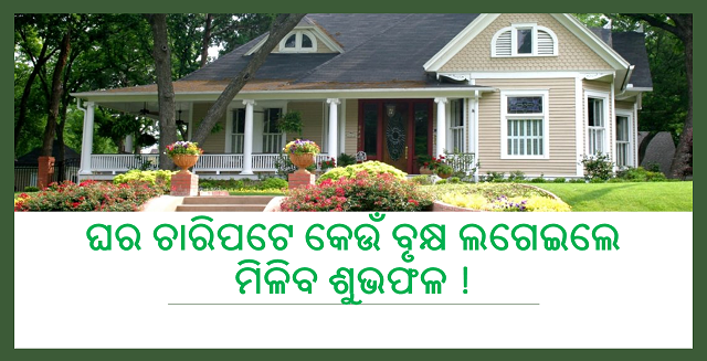 ଘର ଚାରିପଟେ କେଉଁ ବୃକ୍ଷ ଲଗେଇଲେ ମିଳିବ ଶୁଭଫଳ !, Nitidina, Odisha, News, Real Story, Health Tips, Life style, Daily Living, Tips, Job Updates, Yoga, Meditation, Stay Healthy, Save Tree, Save Life, Tree Plantation