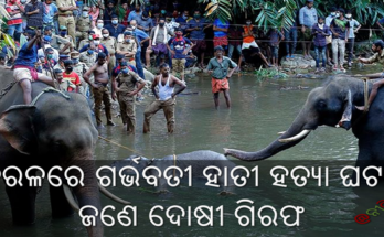 କେରଳ ରେ ଗର୍ଭବତୀ ହାତୀ ହତ୍ୟା ଘଟଣା : ଜଣେ ଦୋଷୀ ଗିରଫ, Kerala elephant's death case, Nitidina, Odisha, News, Real Story, Health Tips, Life style, Daily Living, Tips, Job Updates, Yoga, Meditation, Stay Healthy, Save Tree, Save Life, Extended Lockdown
