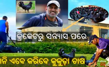 MS Dhoni set for poultry farming orders 2000 black kadaknath chickens, MS Dhoni, Cricket, Dhoni, Nitidina