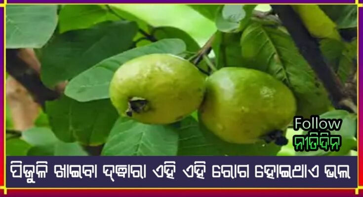 Health benefits Know the benefits of eating guava in winter stomach troubles will be reduced