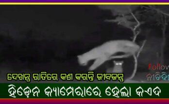 Hidden camera records see what animals do at night, Nitidina