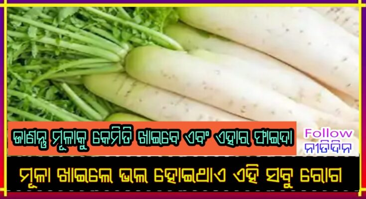 5 tremendous benefits of eating radish in winter start eating today know what benefits you get, Nitidina